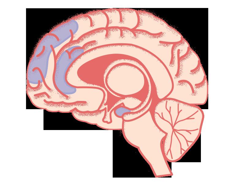 Verschillende gebieden zijn betrokken bij het ervaren van emoties.