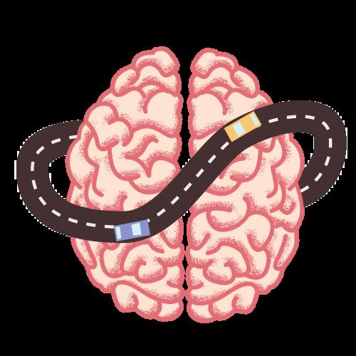 Hersenontwikkeling Kijk In Je Brein