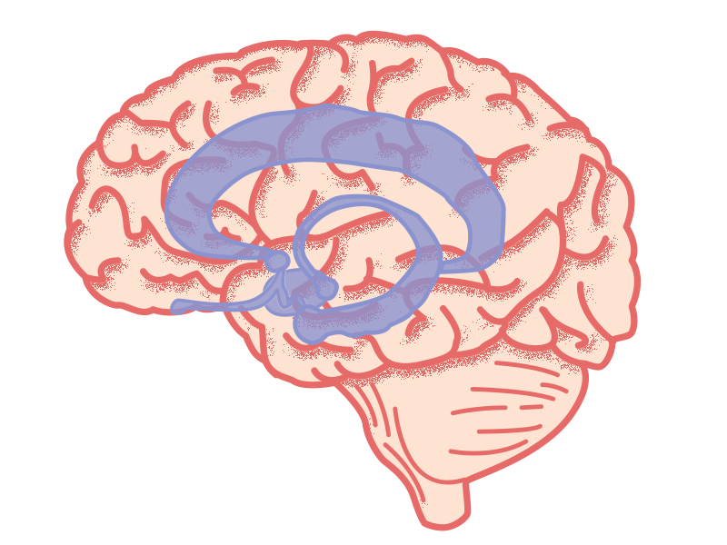 Het diepgelegen limbisch systeem krijgt extra dopamine door verslavende stoffen.
