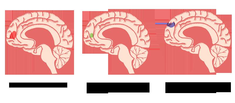 Nadenken over een goede bekende activeert hetzelfde gebiedje als wanneer je over jezelf nadenkt (afbeeldingen links en midden).