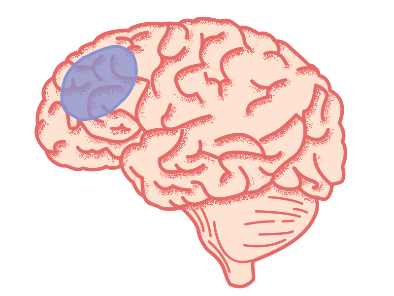 Voorin de hersenen zit een gebied dat belangrijk is voor controle regulatie.